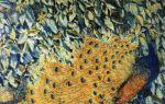 Описание картины михаила ларионова «павлины»