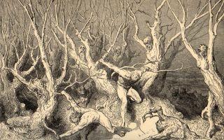 Описание иллюстрации гюстава доре «лес самоубийц»