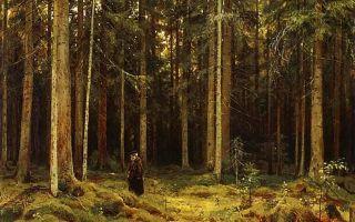 Описание картины ивана шишкина «в лесу графини мордвиновой»