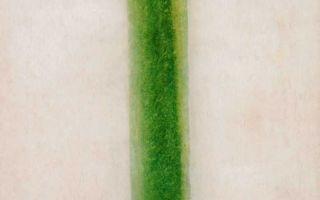 Описание картины ольги розановой «зелёная полоса»